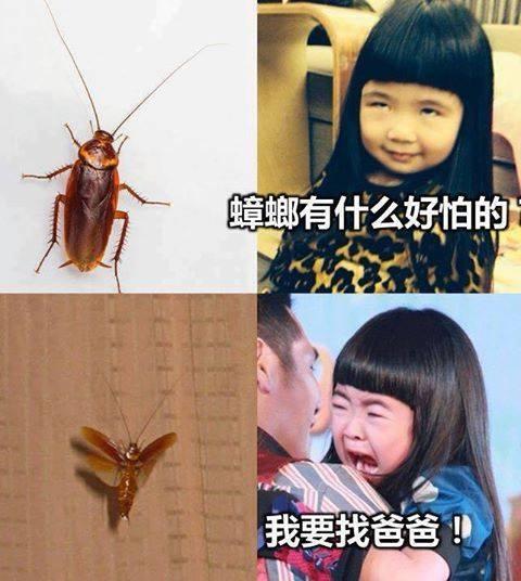 蟑螂恐怖攻擊力.jpg