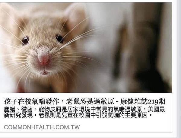 老鼠引發過敏.jpg