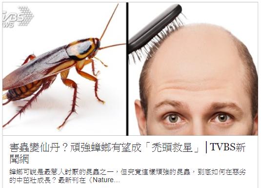 蟑螂成禿頭救星.png