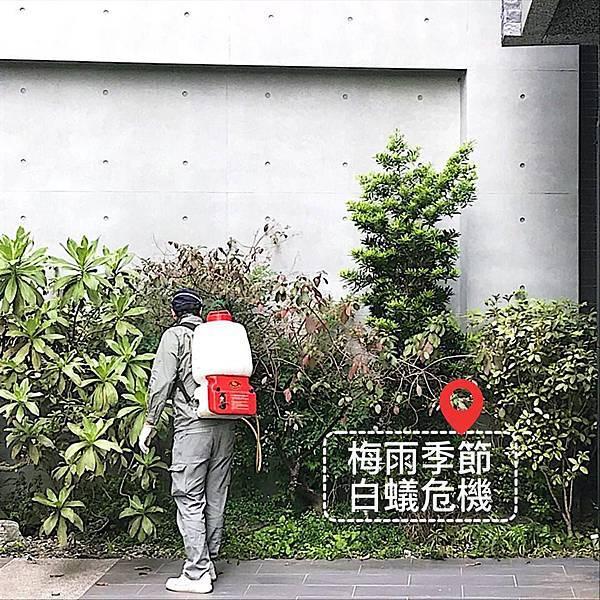 梅雨季節白蟻.jpg