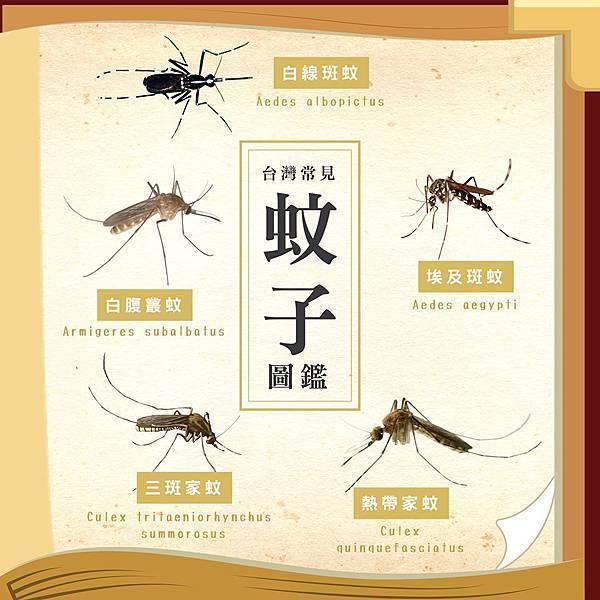 蚊子 圖鑑.jpg