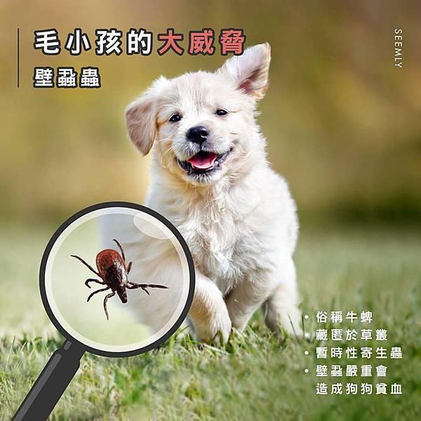 壁蝨蟲.jpg
