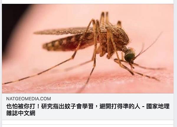 蚊子除蟲.jpg