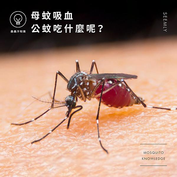 母蚊吸血.jpg