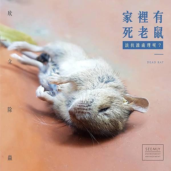 家裡有死老鼠.jpg