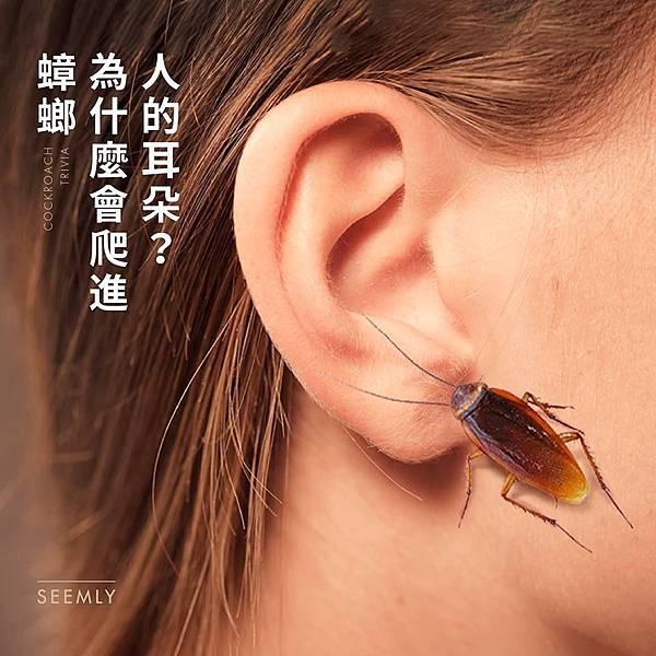 蟑螂進耳朵.jpg