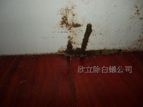 家中有白蟻1.jpg