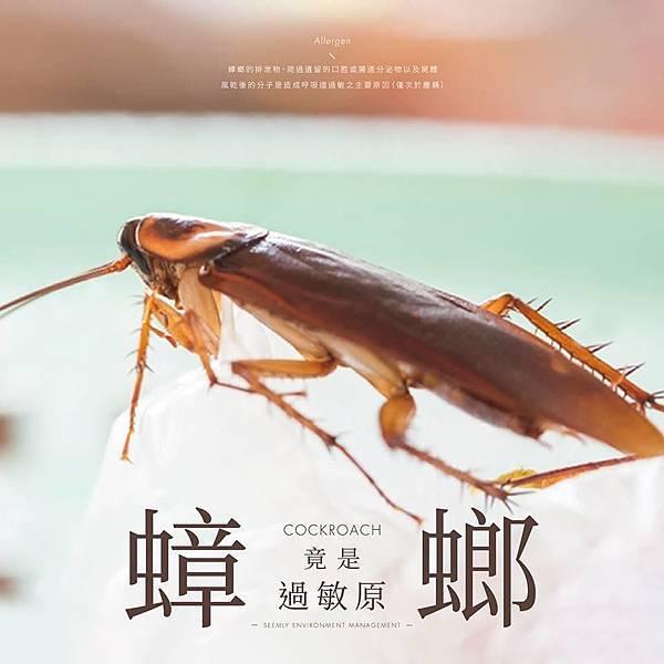 蟑螂引起過敏.jpg