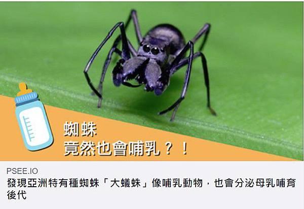 大蟻蛛.jpg