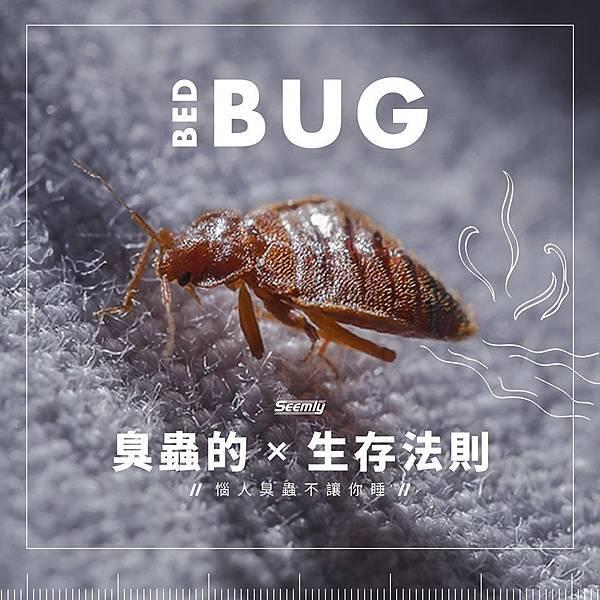 臭蟲.jpg