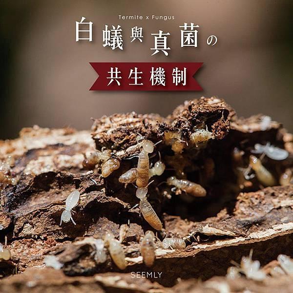 白蟻研究.jpg