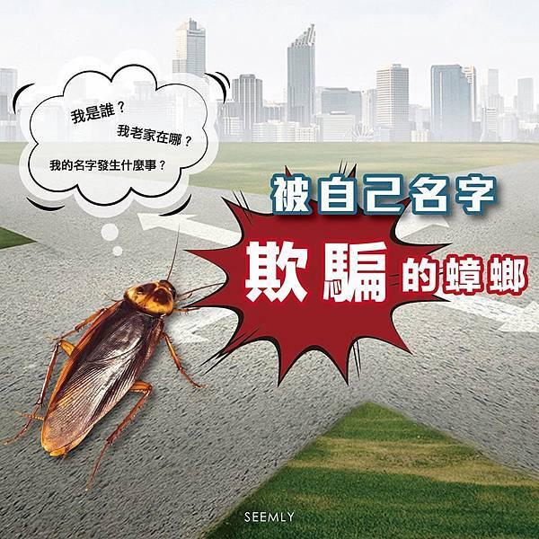 蟑螂 (2).jpg