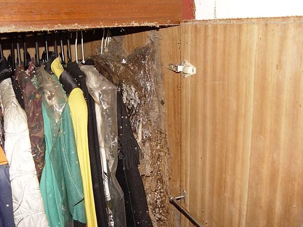 衣櫥裡的塑膠衣套內也可以變成白蟻築巢的地方 (3).JPG