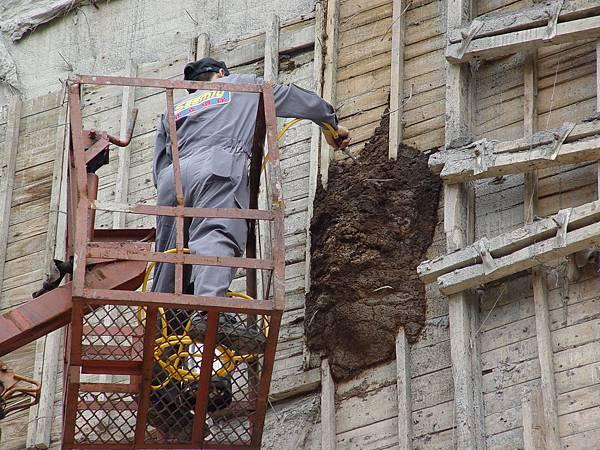 在大樓外牆長了一個好大的白蟻窩,需以吊車上去處理。 (6).JPG