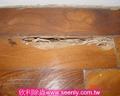 木地板被白蟻蛀空