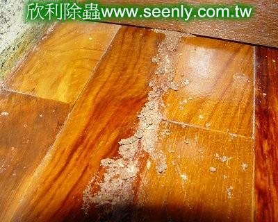白蟻從踢腳板修築蟻道竄出