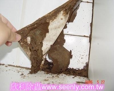 蛀蝕-櫥櫃被白蟻蛀蝕剩塑膠皮
