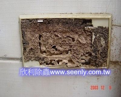 管路被白蟻侵襲-插座開關蟻泥