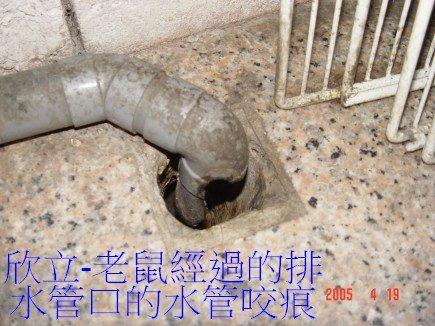 老鼠經過的排水管口的水管咬痕