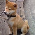 狐狸臉2.jpg