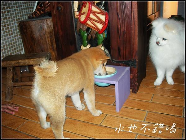 饅頭2.JPG
