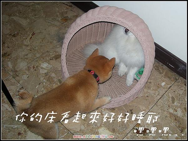 饅頭5.JPG