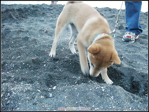 挖洞4.jpg