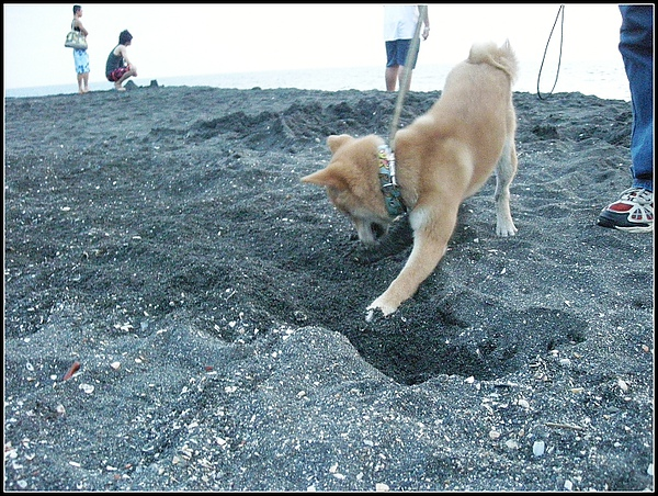 挖洞8.jpg