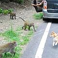 猴子9.JPG