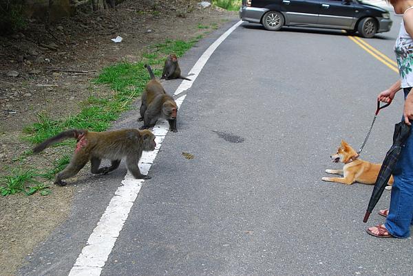 猴子13.JPG