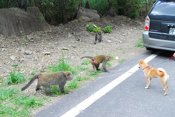 猴子12.JPG