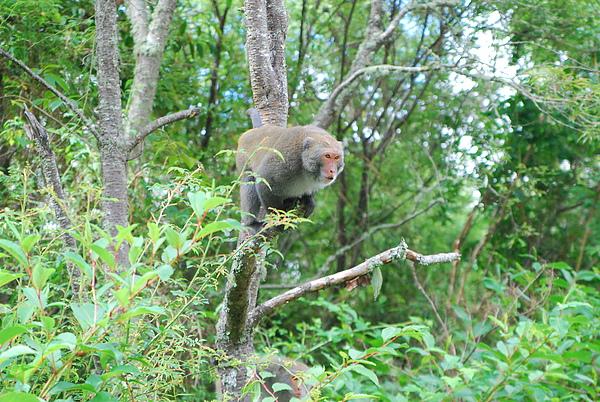 猴子2.JPG