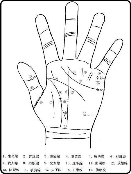 圖1 手掌主要掌紋圖