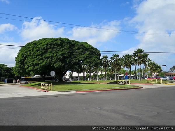 P14)景區入門處的大樹.jpg
