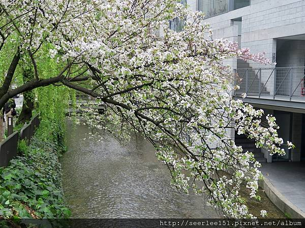 P4)春色三分,二分塵土,一分流水。.jpg