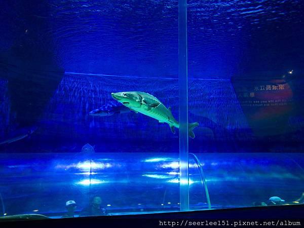 P18)海洋公園裏的鯊魚.jpg