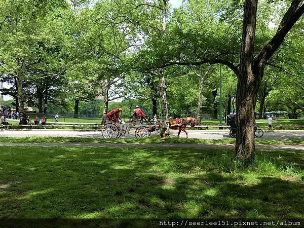 P15)紐約中央公園.JPG