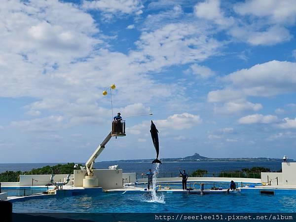 P7)美麗海海洋公園的海豚表演.jpg