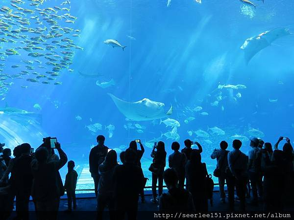 P9)美麗海海洋公園的巨大水族箱.jpg
