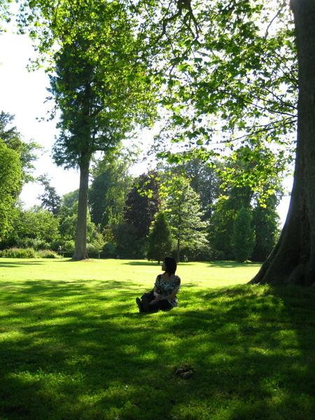 凡爾賽宮後花園大樹和大草皮