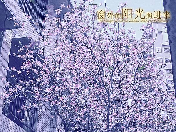 img_3554_副本