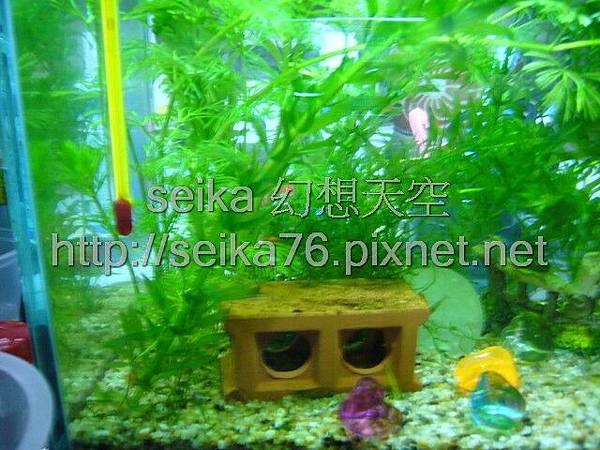 2008_05_25小魚缸