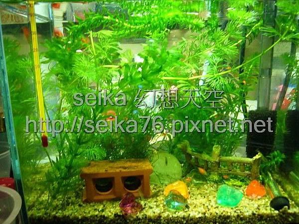 2008_05_25小魚缸_000