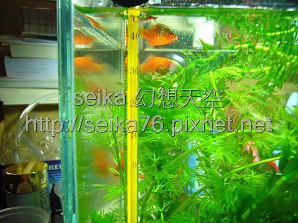 2008_05_25小魚缸_004