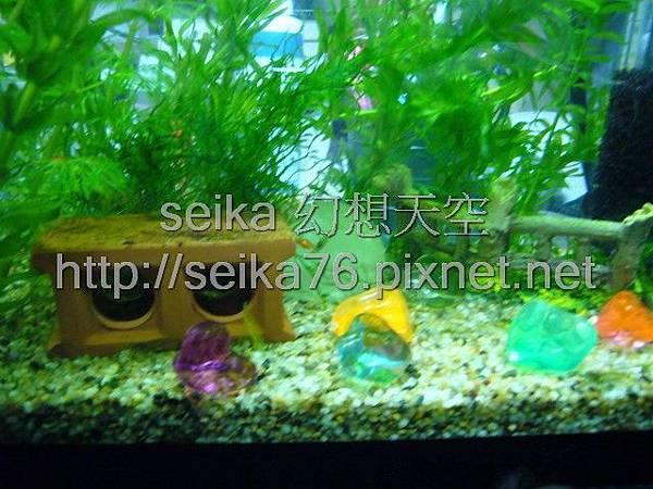 2008_05_25小魚缸_006