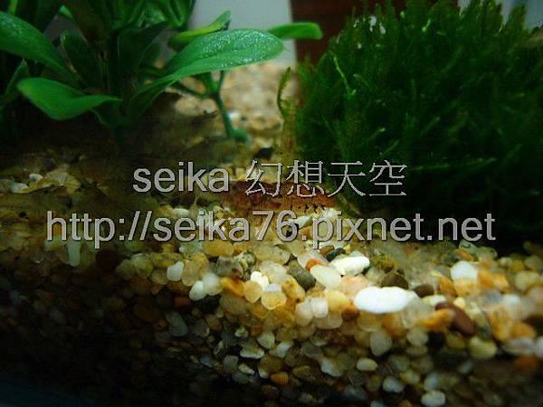 2008_01_03迷你缸_000