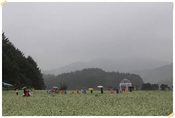 江原道-蕎麥花