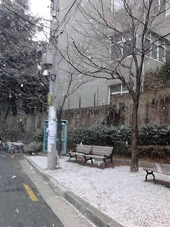 釜山大學雪景