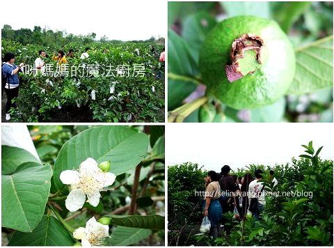 希望廣場農產水果參訪-P3.jpg