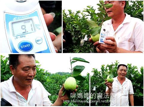 希望廣場農產水果參訪-P4.jpg